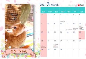 2021年3月ぷちちゃん